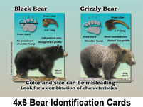 4x6BearIdentificationCards