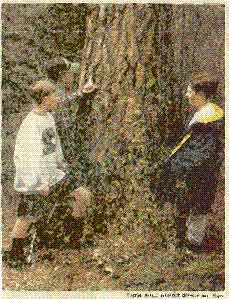 Victor seventh-graders James Houser, left, Casey Taylor, in the baseball cap, and Evan Schaefer inspect scratches imitating bear sign on the trunk of a mature pine.